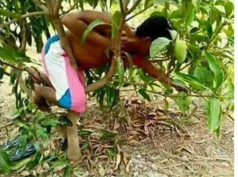 boy-on-tree